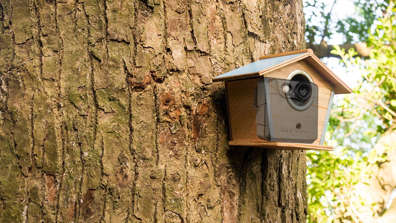 Outdoor Hidden Camera 9